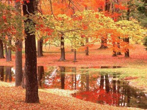 autunno-rosso-1